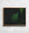 Kapradí v džungli | Číča v kleci ORIGINAL Originální plakát od Číča v kleci | Dekorace do bytu | Plakáty | Dekorace